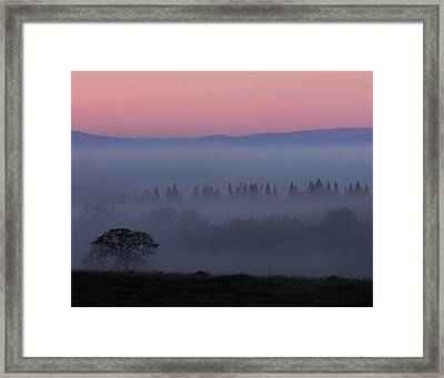Trees In Fog At Sunrise Framed Print by Robert Woodward