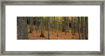 Trees In Forest, Smoky Mountains Framed Print by Panoramic Images