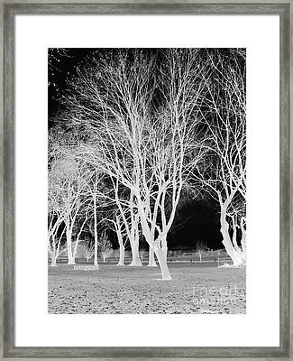 Trees In Park 2 Framed Print by Chalet Roome-Rigdon