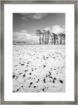 Trees In Snow Scotland IIi Framed Print by John Farnan