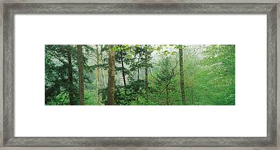 Trees In Spring Forest, Turkey Run Framed Print by Panoramic Images