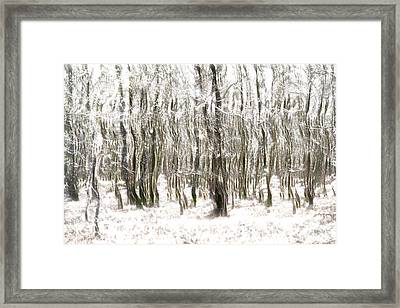 Trees In The Forest Abstract Framed Print by Natalie Kinnear