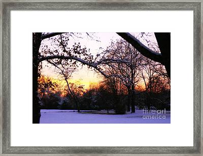 Trees In Wintry Pennsylvania Twilight Framed Print by Anna Lisa Yoder