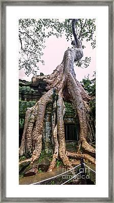 Trees Of Ta Prohm Framed Print by Joerg Lingnau