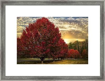 Trees On Fire Framed Print by Debra and Dave Vanderlaan