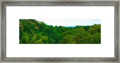 Trees On The Bay, Rempart And Mamelles Framed Print by Panoramic Images
