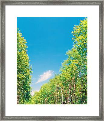 Trees Projected Against Blue Sky Framed Print by Panoramic Images
