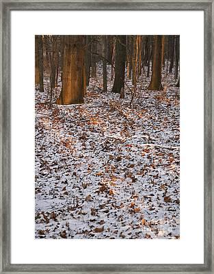 Trees Framed Print by Steven Ralser