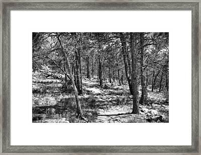Trees Framed Print by Tony Boyajian