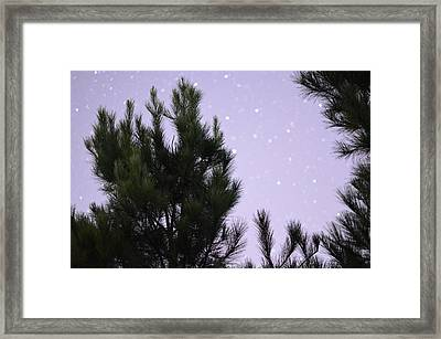 Trees Under The Stars Framed Print by David Morefield