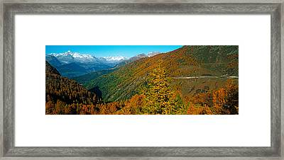 Trees With Road In Autumn At Simplon Framed Print by Panoramic Images