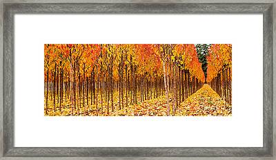 Treescape 2 Framed Print by Rebecca Cozart