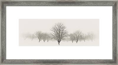 Treeternity Framed Print by Jim Speth