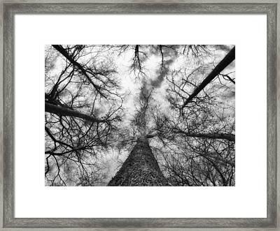 Treetops Framed Print by Tom Druin