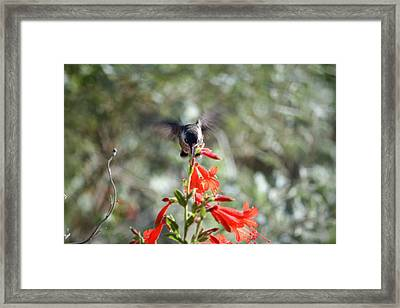 Triangle Framed Print by Wendi Matson