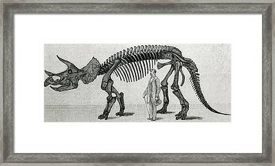 Triceratops Framed Print by English School