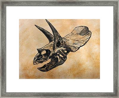 Triceratops Skull Framed Print by Harm  Plat