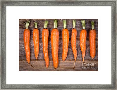 Trimmed Carrots In A Row Framed Print by Jane Rix