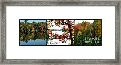 Trio Of Triumphant Color Framed Print by Gail Matthews
