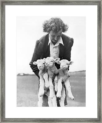 Triplet Lambs Framed Print by Underwood Archives