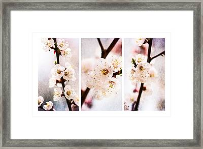 Triptych Light Of Spring 2 Framed Print by Alexander Senin