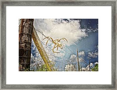 Trophy Display Framed Print by Scott Pellegrin
