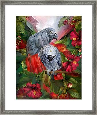 Tropic Spirits - African Greys Framed Print by Carol Cavalaris