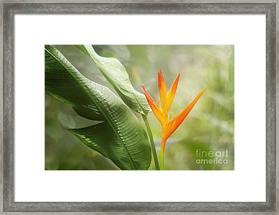 Tropical Flower Framed Print by Natalie Kinnear