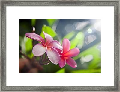 Tropical Heat Framed Print by Sean Davey