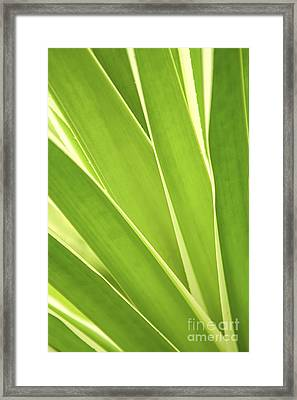 Tropical Leaves Framed Print by Elena Elisseeva