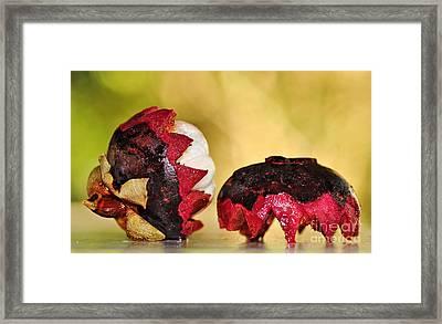 Tropical Mangosteen Framed Print by Kaye Menner