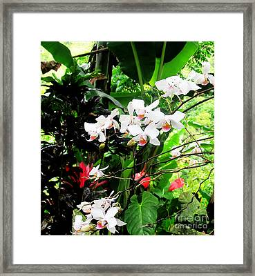 Tropical Orchids Framed Print by Tina M Wenger