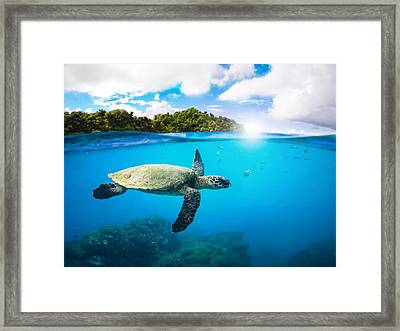 Tropical Paradise Framed Print by Nicklas Gustafsson