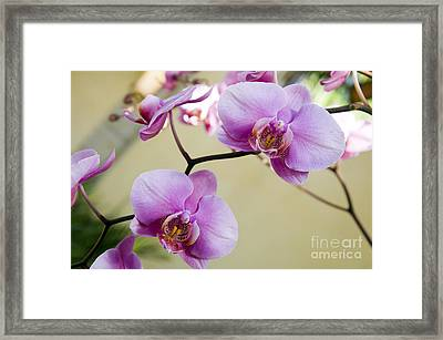 Tropical Radiant Orchid Flowers Framed Print by Andee Design