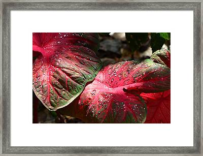 Tropical Rain - Botanical Art By Sharon Cummings Framed Print by Sharon Cummings