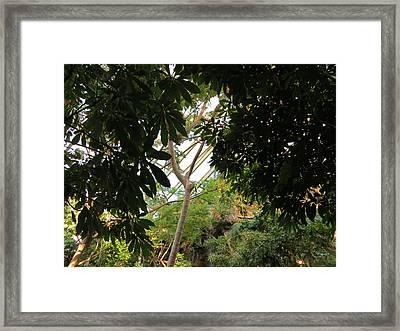 Tropical Rain Forest Waterfall Framed Print by Elisabeth Ann