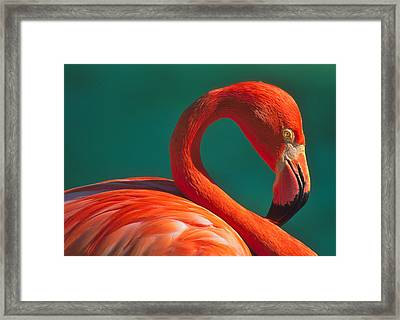 Tropical Rose Framed Print by Tony Beck