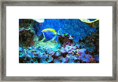 Tropical Seas Powder Blue Tang  Framed Print by Rosemarie E Seppala