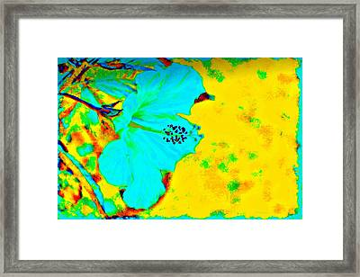 Tropical Vibrance In Hibiscus Framed Print by Barbara Chichester