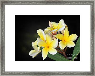 Tropical Yellow Frangipani Framed Print by Sabrina L Ryan