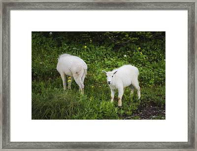 Trouble Maker Framed Print by Peter Coskun