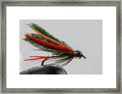 Trout Fly  Framed Print by Craig Lapsley