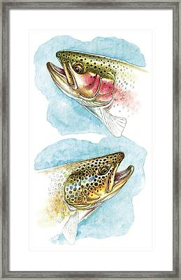 Trout Study Framed Print by JQ Licensing