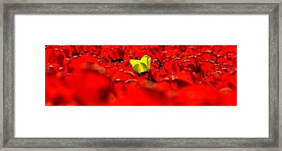 True Color Panorama Framed Print by Benjamin Yeager