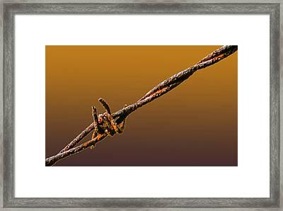 True Grit Framed Print by Brian Stevens