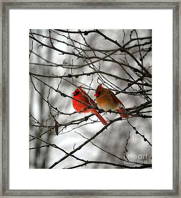True Love Cardinal Framed Print by Peggy  Franz