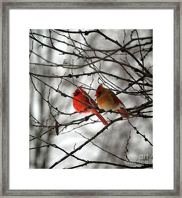 True Love Cardinal Framed Print by Peggy  Franz