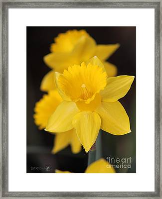 Trumpet Daffodil Named Exception Framed Print by J McCombie