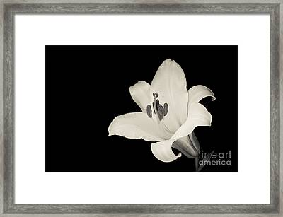 Trumpet Lily Framed Print by Oscar Gutierrez