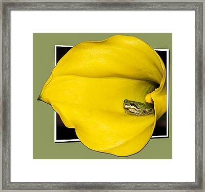 Trumpet Tongue Oof Framed Print by Jean Noren